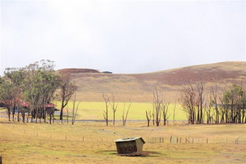 Ranch land along the Saddle Road.  c. 2015 S.A. Jones.